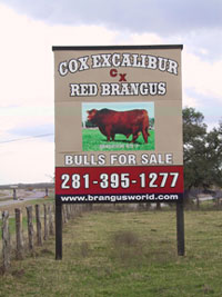 Cox Excalibur Red Brangus Sign at the Ranch