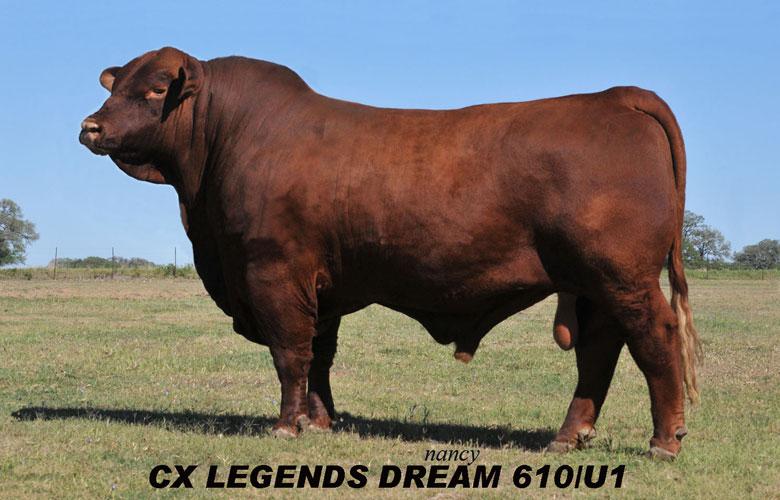 slide-legends-dream